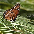 Teeter Totter by JpPhotos
