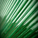 Angular by Jodi Morgan