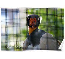 Vulture Shock Poster