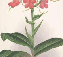 Iconagraphy of Orchids Iconographie des Orchidées Jean Jules Linden V2 V3 1893 0107 Sticker