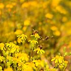 Busy Bees Collection 002 {Common honey bees (Apis mellifera) Free State, South Africa} by Qnita