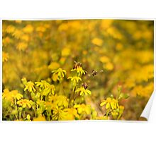 Busy Bees Collection 002 {Common honey bees (Apis mellifera) Free State, South Africa} Poster