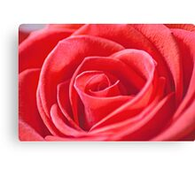 Macro of a red rose Canvas Print