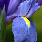 Creating Iris by Joy Watson