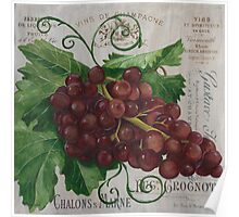French Wine Red Grapes Poster
