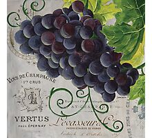 French Purple Grapes Photographic Print