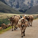 Cattle at Puerta San Glorio, Picos de Europa by Christopher Cullen