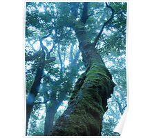 Rainforest Giant Poster