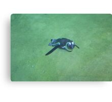 Penguin under Water Canvas Print