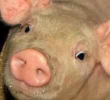miss piggy by bobby1