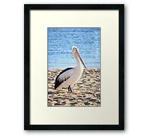 Pelican at Monkey Mia W.A. Framed Print