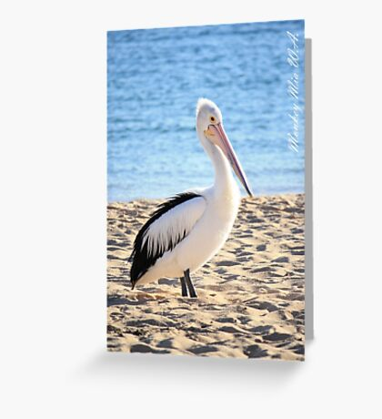 Pelican at Monkey Mia W.A. Greeting Card