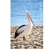 Pelican at Monkey Mia W.A. Photographic Print