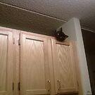 black head by catnip addict manor