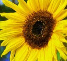 Sunflower - Impressions Sticker