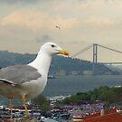 Seagull and Bosphorus Bridge, Istanbul by digitalmidge