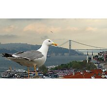 Seagull and Bosphorus Bridge, Istanbul Photographic Print