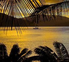 tropical sunset by angelo marasco