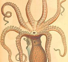 Octopus Vintage illustration by Vintage Designs