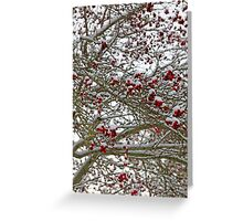 Snow covered tree full of red berries Greeting Card