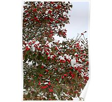 Snow covered red berry tree Poster