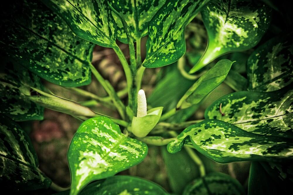 tropical green by angelo marasco