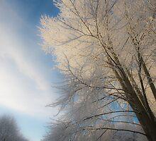 Winter by marc melander