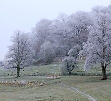 Dorset landscape blanketed with fog and frost  by chris-csfotobiz