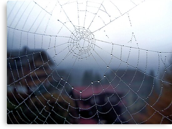 A spider's web by Maureen Grobler
