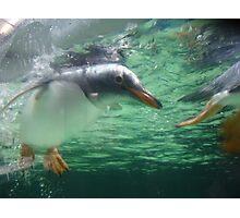 Mr Penguin Photographic Print