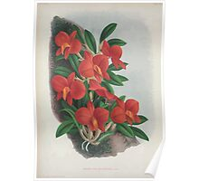 Iconagraphy of Orchids Iconographie des Orchidées Jean Jules Linden V4 1888 0078 Poster