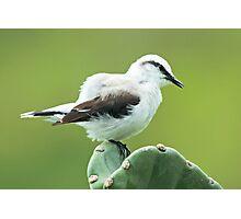 Fluffy Bird Photographic Print