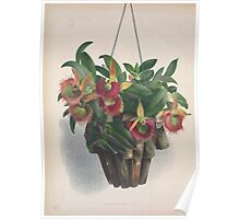 Iconagraphy of Orchids Iconographie des Orchidées Jean Jules Linden V4 1888 0022 Poster