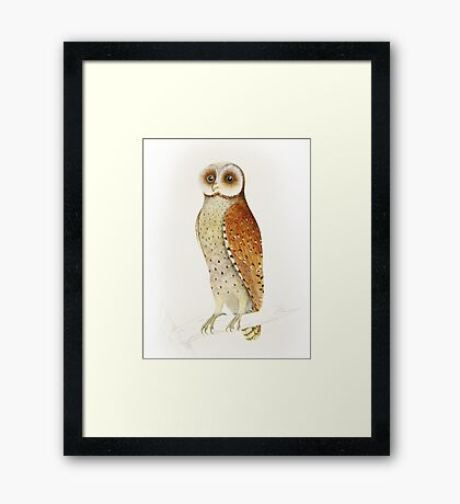 Cute Bay Owl vintage illustration Framed Print