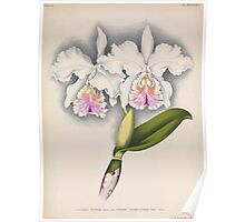 Iconagraphy of Orchids Iconographie des Orchidées Jean Jules Linden V16 1900 0070 Poster