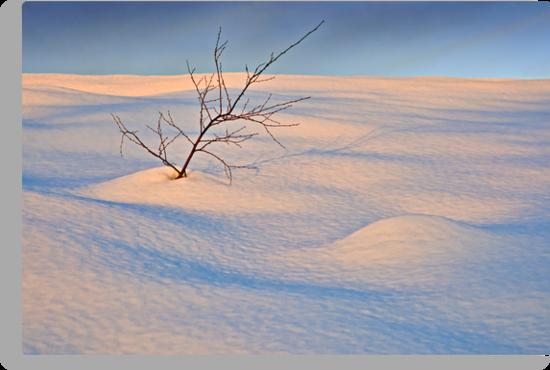 In The Bleak Mid-Winter by David Lewins