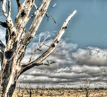 Dead Forest by Freese