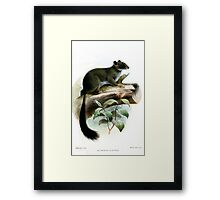 Funky Cameroon Scaly-tail Framed Print