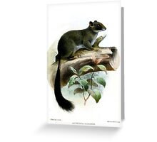 Funky Cameroon Scaly-tail Greeting Card