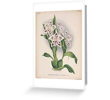 Iconagraphy of Orchids Iconographie des Orchidées Jean Jules Linden V15 1899 0102 Greeting Card