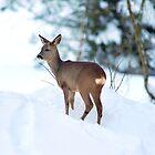 Winter serenity by Alan Mattison