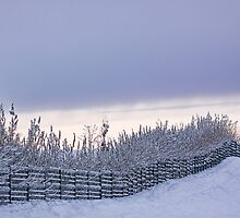 Fenced In by Lynne Morris