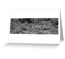 Trio of Zebra Greeting Card