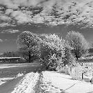 Frozen Trees in Mono by Mark Dobson
