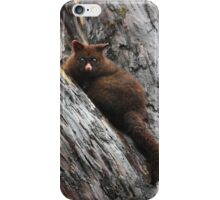 Brush Tail Possum iPhone Case/Skin