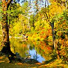 Autumn Splendor  by Diane Schuster