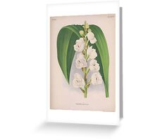 Iconagraphy of Orchids Iconographie des Orchidées Jean Jules Linden V15 1899 0042 Greeting Card