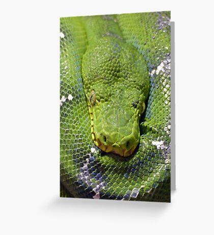 Resting Snake Greeting Card