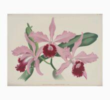 Iconagraphy of Orchids Iconographie des Orchidées Jean Jules Linden V8 V9 1895 0128 Kids Tee