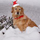 Buster At Christmas  by Sandra Cockayne